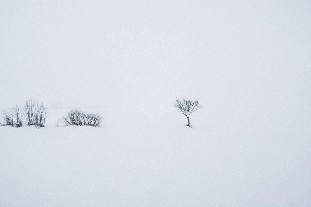 Trentino_Curon_Venosta_Copyright_Luca_Bacciocchi-16